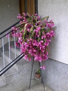 Biljke u vrtu-slika0425.jpg