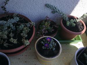 Biljke u vrtu-slika0498.jpg