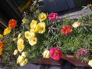 Biljke u vrtu-slika0665.jpg