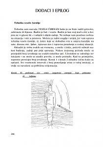 Geometrija božanske iskre-serena-01.jpg