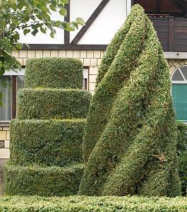 Biljke u vrtu-lipolist-112.jpg